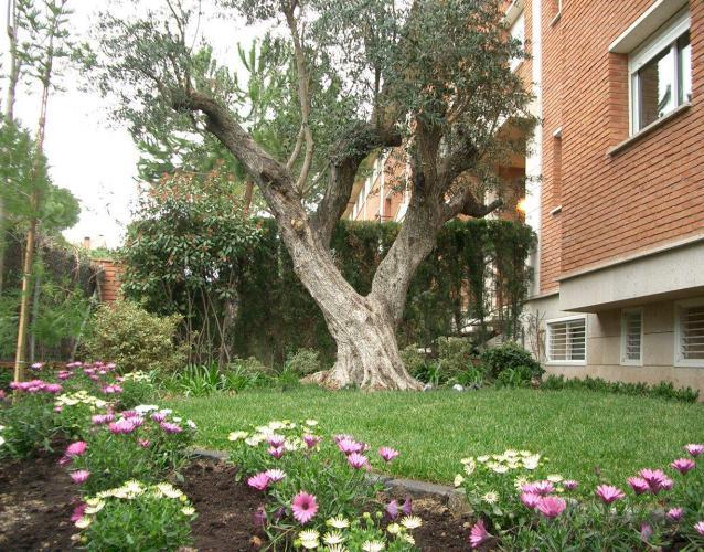 pequeño jardín mediterráneo