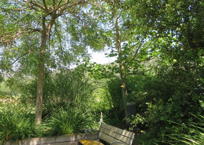 Jardin en maceteros, arboles y arbustos