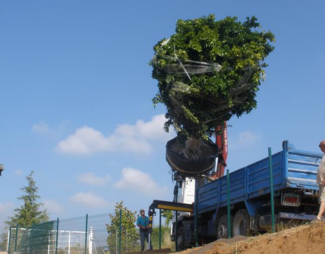 plantacion de arboles ejemplares