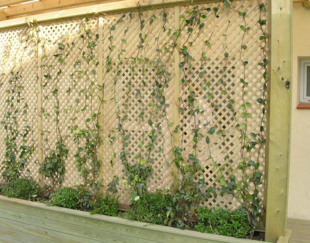 jardineras con celosias y plantas trepadoras patio escuela