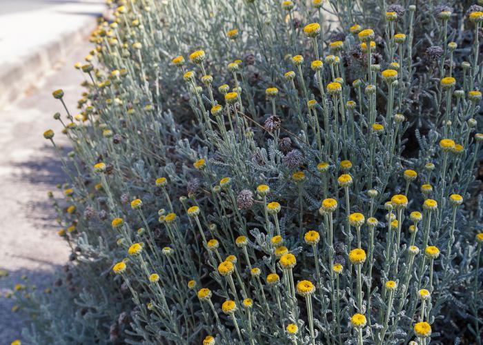 plantas en el parque publico en Sitges