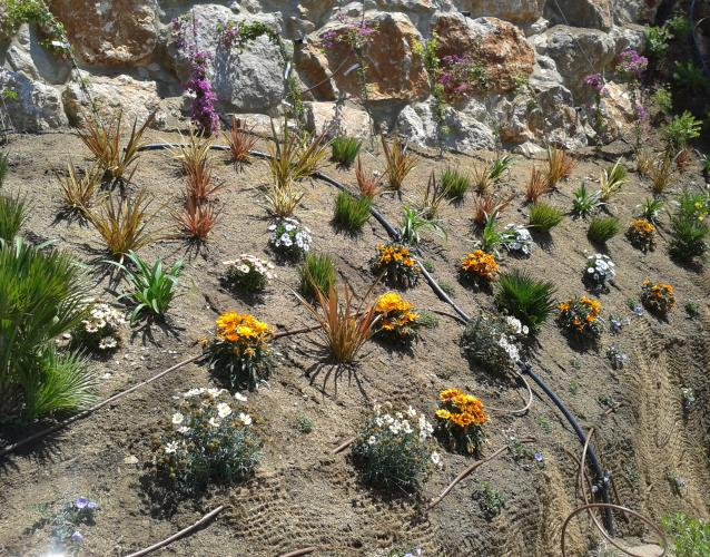 посадка растений на склоне
